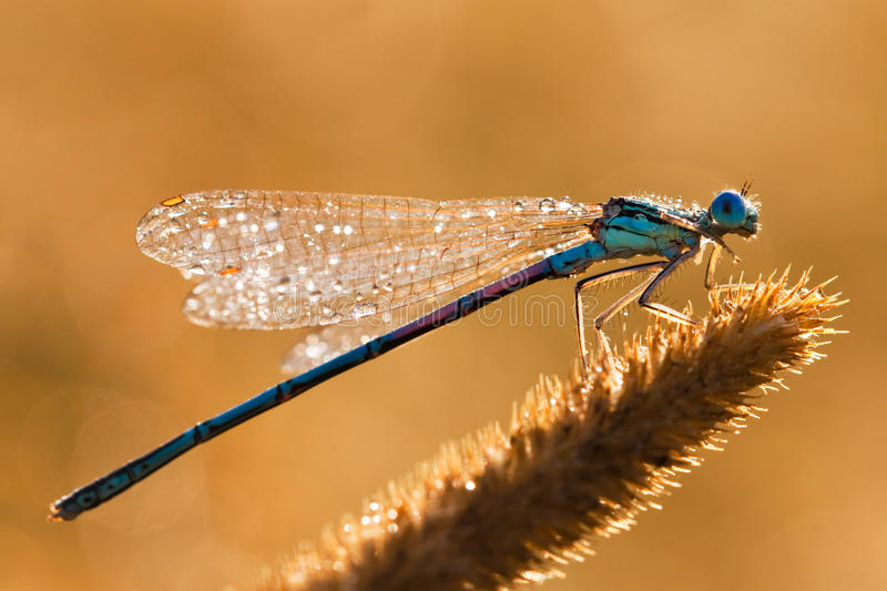 Download Dragonfly stock photo. Image of macro, object, damselfly - 24664758