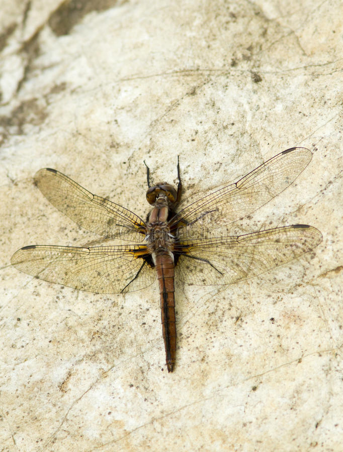 Download Dragonfly Stock Photos - Image: 24861393
