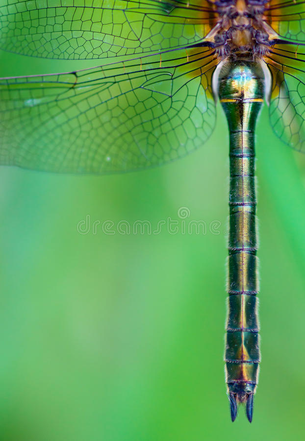 Download Dragonfly stock image. Image of bright, green, beautiful - 25983153