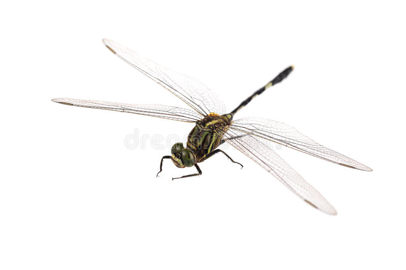 Download Dragonfly Stock Photo - Image: 27396460