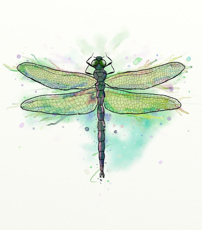 Dragonfly иллюстрация штока