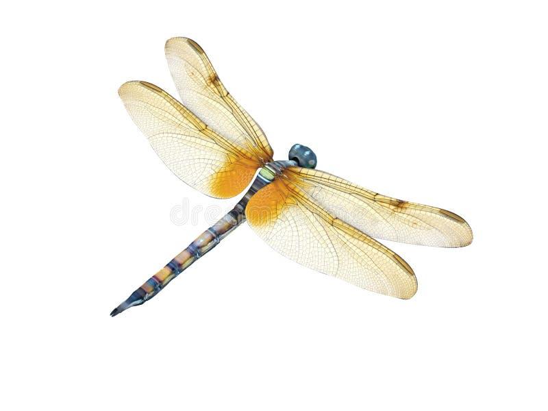 dragonfly ilustracja wektor