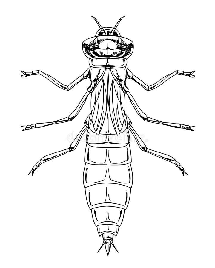Dragonfly boginka ilustracji