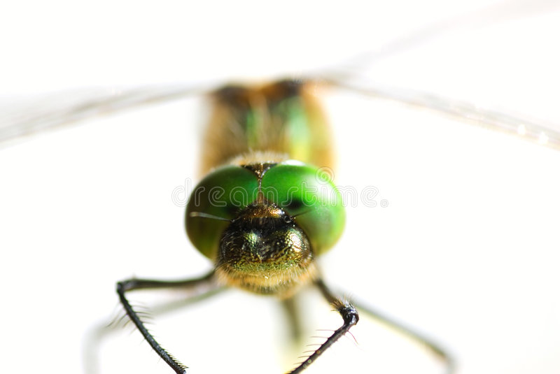 Download Dragonfly close-up stock image. Image of chaser, macro - 2536641