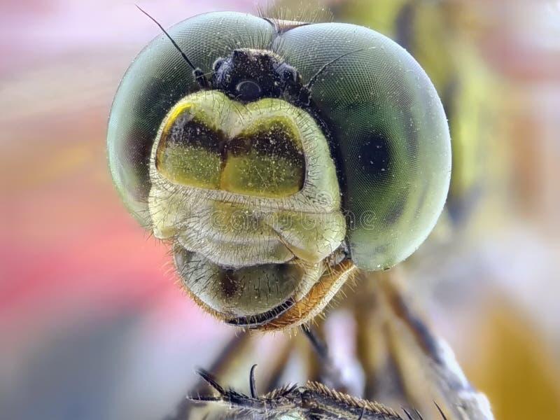 Dragonfly close up royalty free stock photos