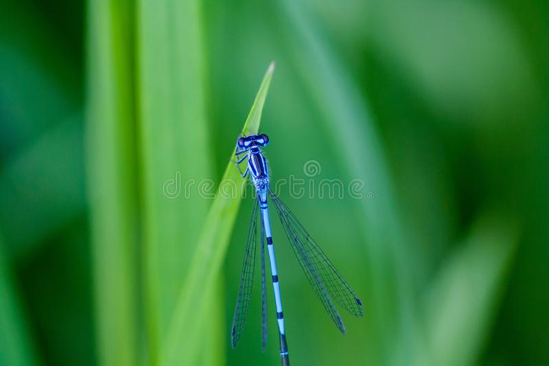 Dragonfly, Damselfly, Dragonflies And Damseflies, Insect Free Public Domain Cc0 Image