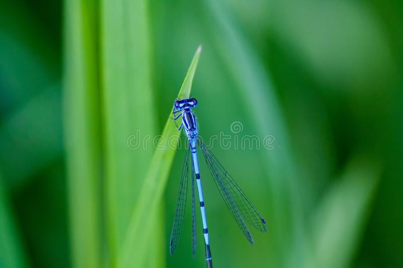 Dragonfly, Damselfly, Dragonflies And Damseflies, Insect stock photos