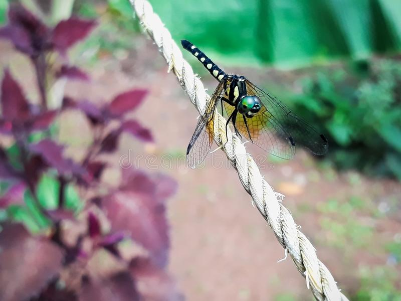 Download Dragonfly stock photo. Image of dragonfly, small, nature - 100827958