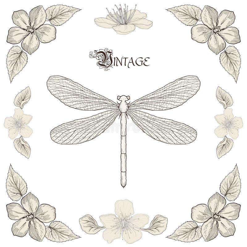 Dragonfly drawing vintage engraving style royalty free illustration