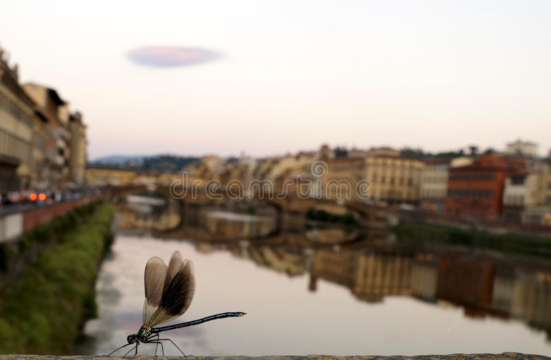 Dragonfly in Florence royalty free stock images