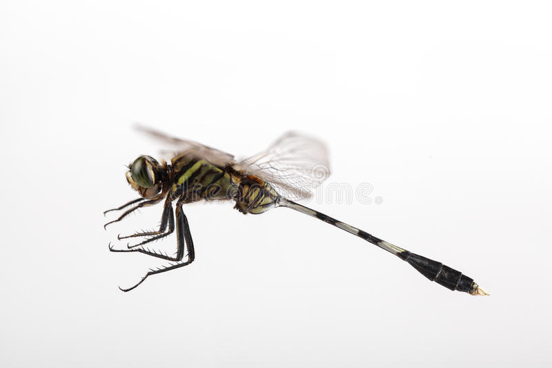 Download Dragonfly flying stock photo. Image of closeup, nature - 27396494