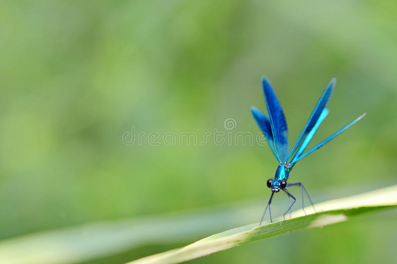 Dragonfly in forest stock images