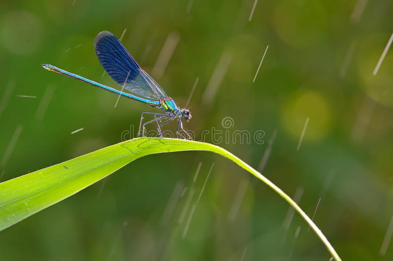 Dragonfly in forest royalty free stock photography