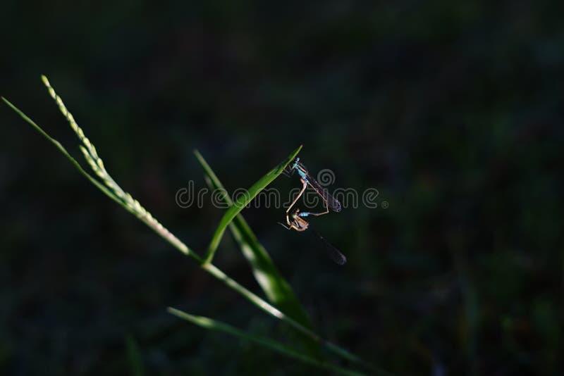 Dragonfly, grass, green, bokeh stock photo