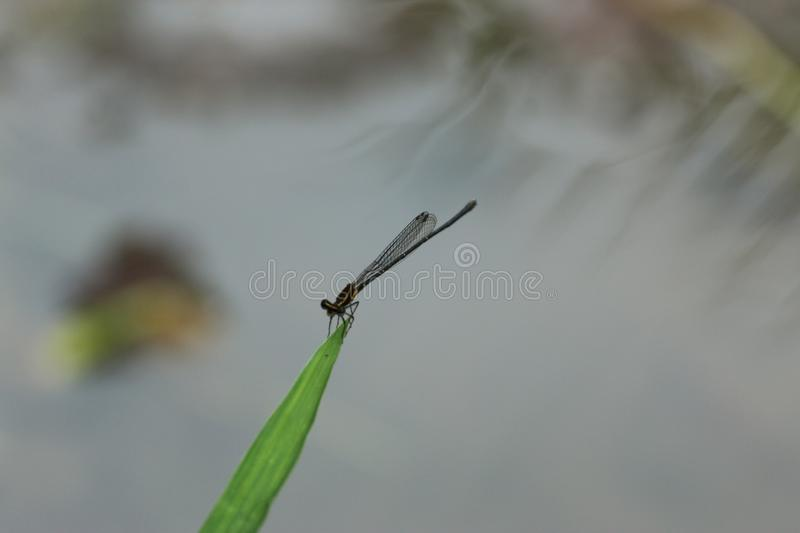 Dragonfly in Hong Kong royalty free stock images