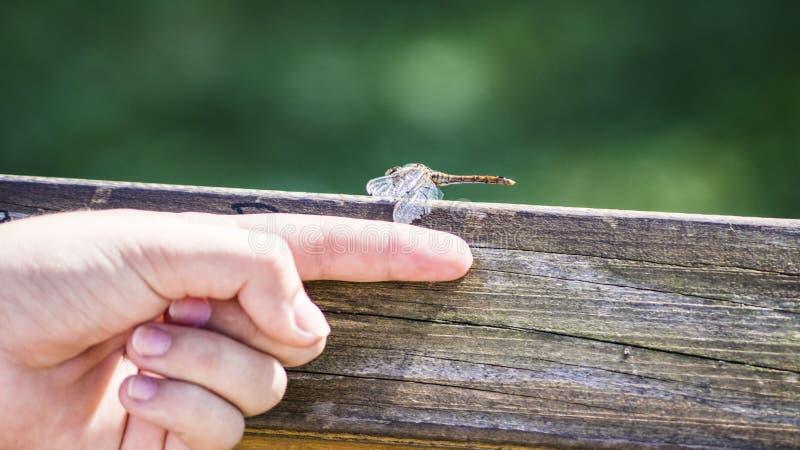 Dragonfly i istota ludzka zdjęcie stock