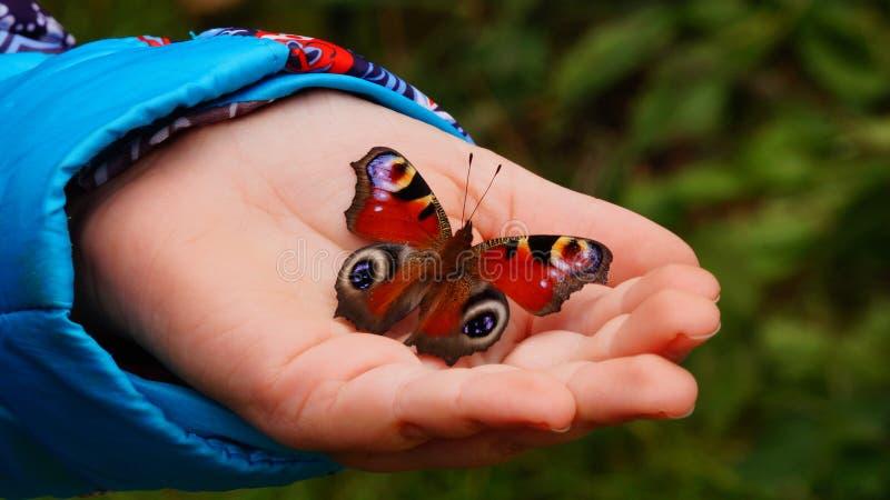 Dragonfly i istota ludzka zdjęcia royalty free