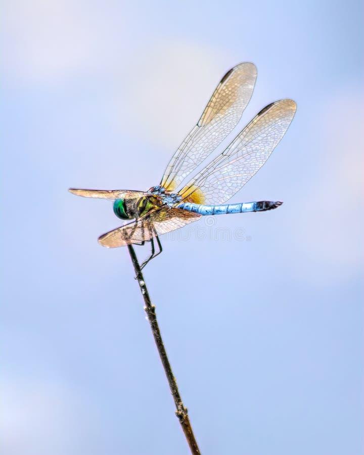 Dragonfly i niebo fotografia stock