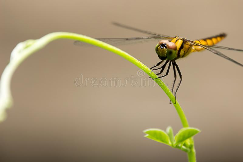 Dragonfly Island on the top of the tree for background or wallpaper. royalty free stock photo