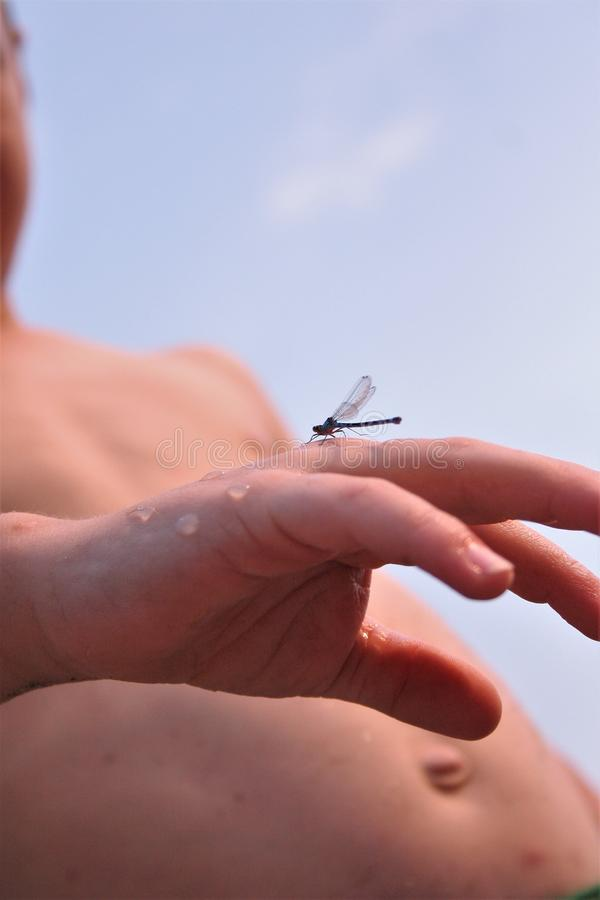 Insect on boys hand stock photography
