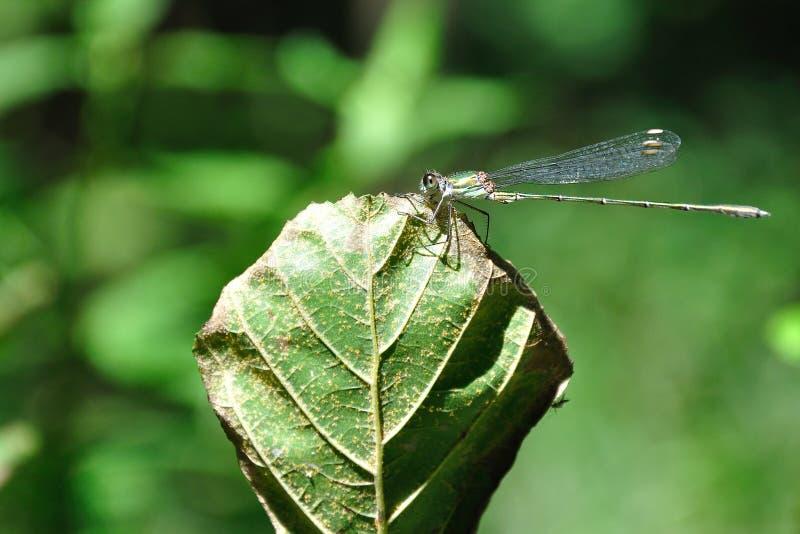 Dragonfly On Leaf Free Public Domain Cc0 Image