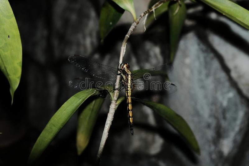 Dragonfly on leaf stock photos