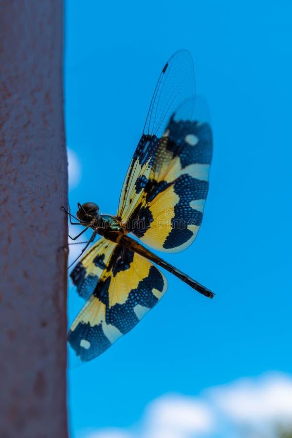 Dragonfly met blauwe lucht royalty-vrije stock afbeeldingen
