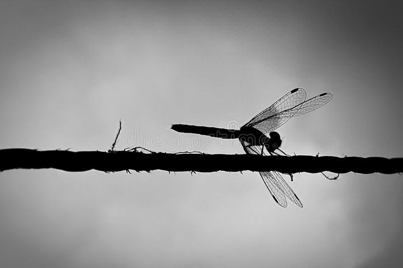 Dragonfly na arkanie zdjęcie royalty free