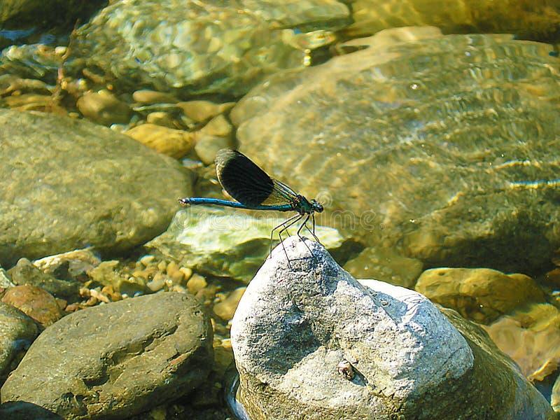 Dragonfly na pokoju skała obrazy royalty free