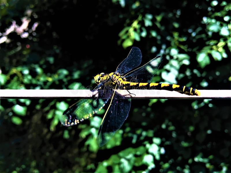 Dragonfly, nature and freedom stock photo