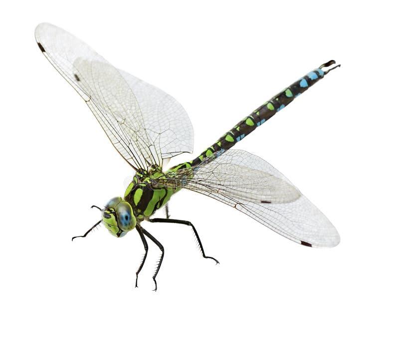 Dragonfly odizolowywający obraz royalty free
