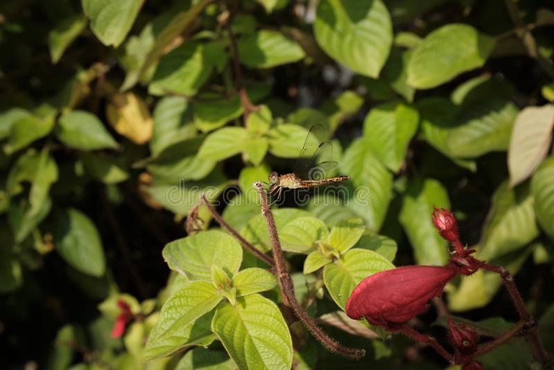 Dragonfly op blad stock foto's