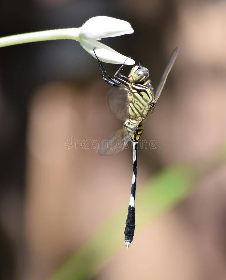 Dragonfly perched on a flower stock photo