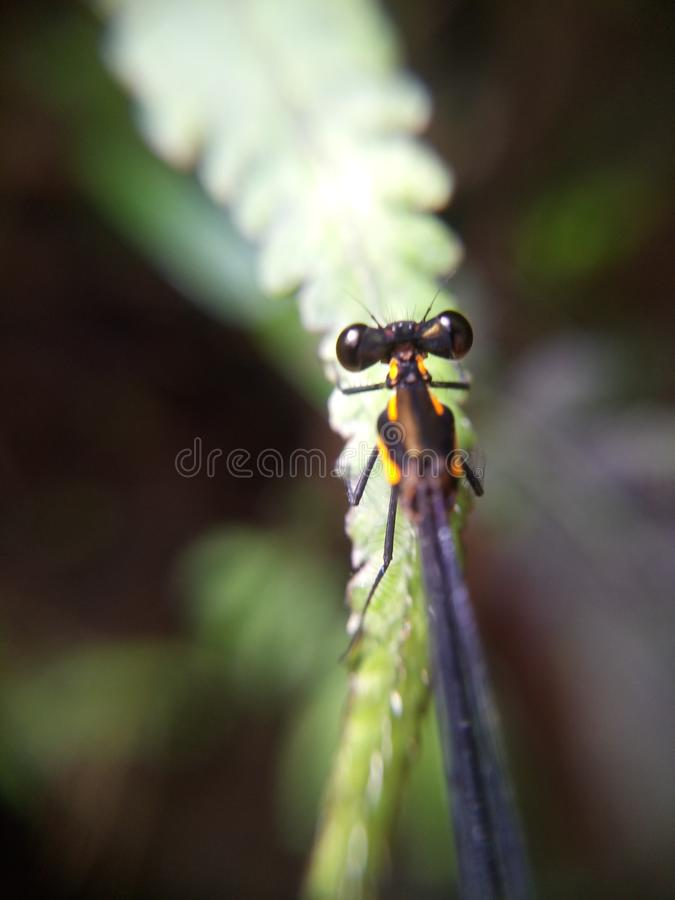 A dragonfly at green leave stock photos