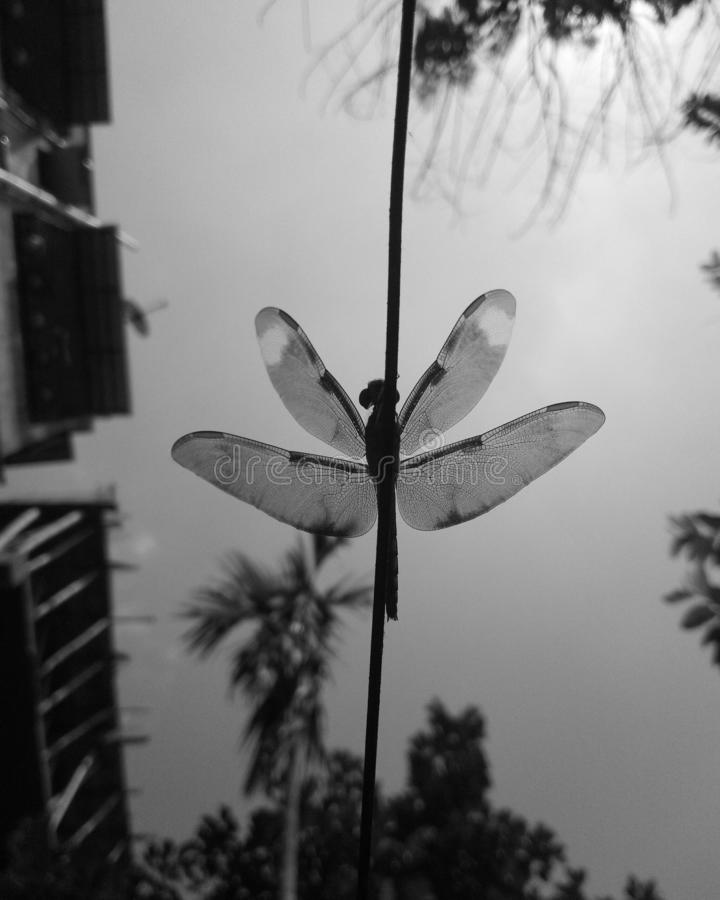 Dragonfly. The pictures just discribe about the things you see in a different way stock photos