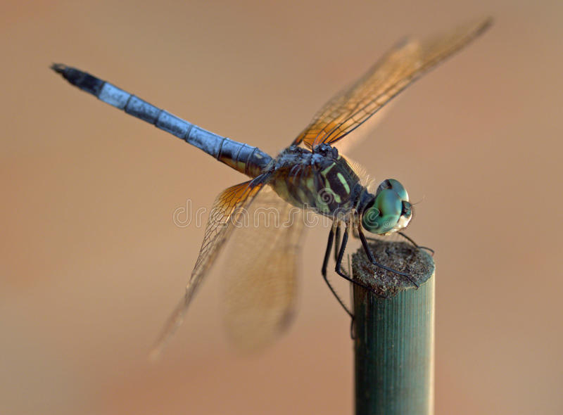 Dragonfly rest stop stock photo