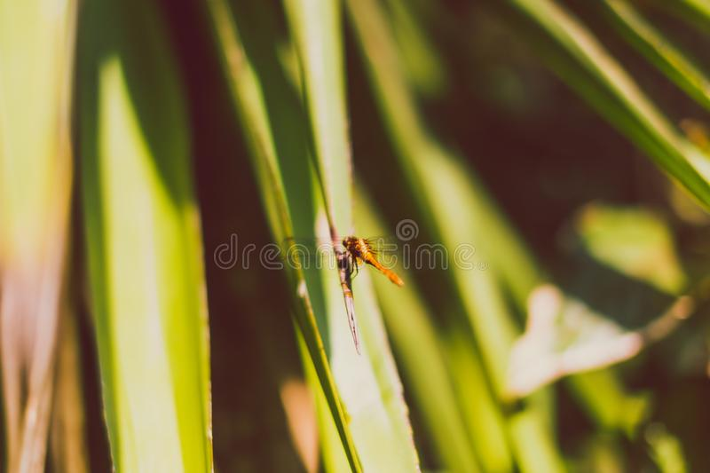 Dragonfly resting on exotic palm tree leaves royalty free stock photography