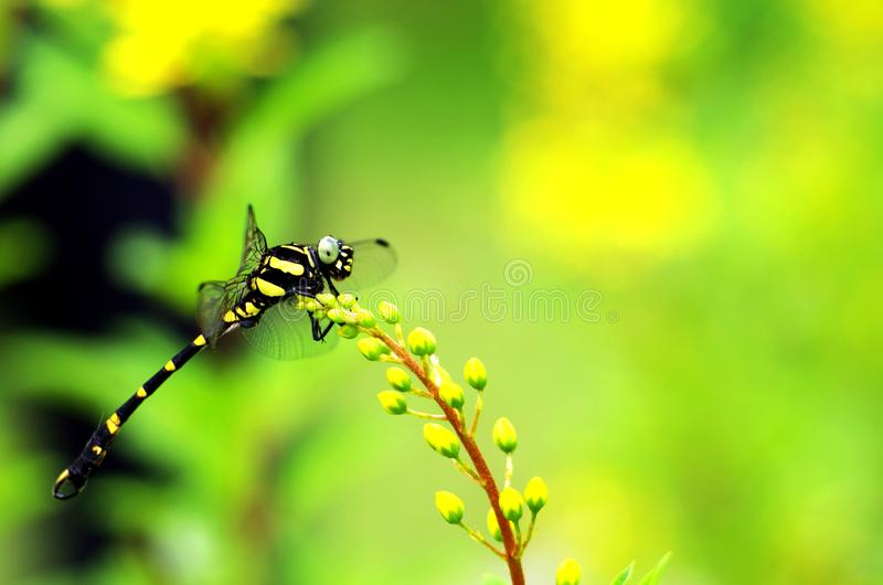 Dragonfly. Resting on green plant