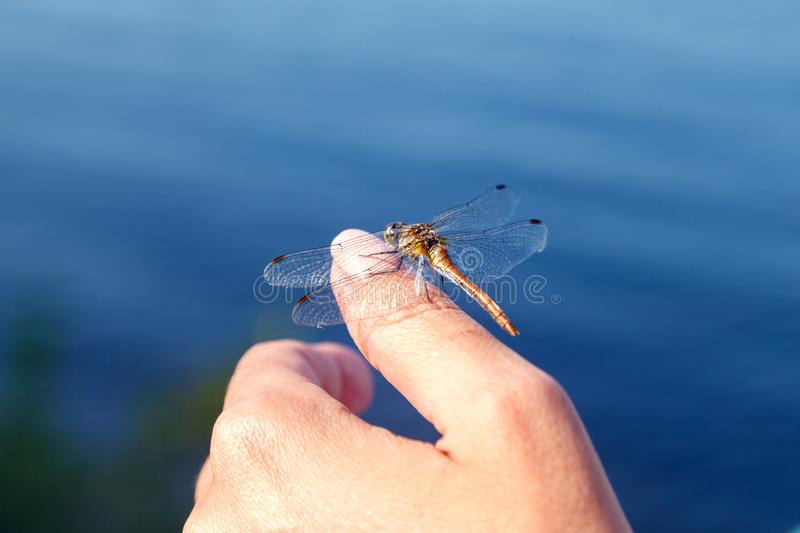 Dragonfly resting, sitting on a woman hand on a background of water. Selective focus, blurred background stock images
