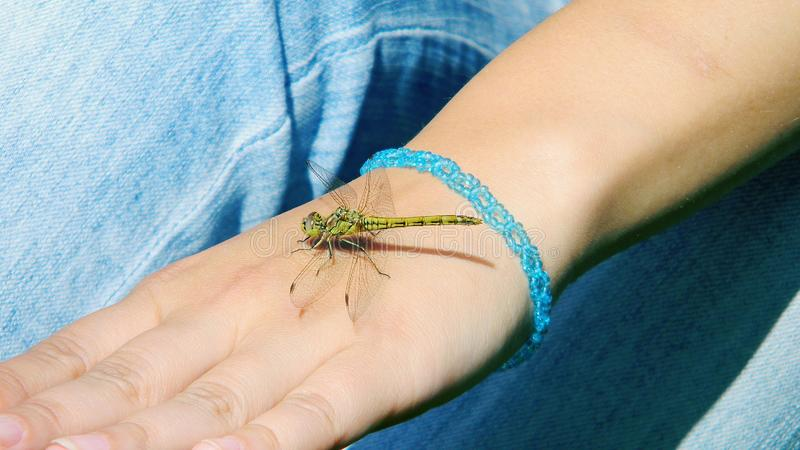Dragonfly sits on the hand stock photo