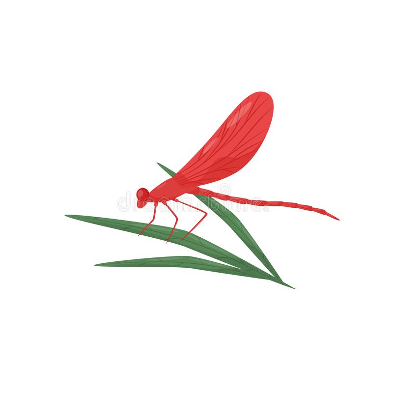 Dragonfly sitting on green leaf. Fast-flying insect with bright red wings and long body. Flat vector design royalty free illustration