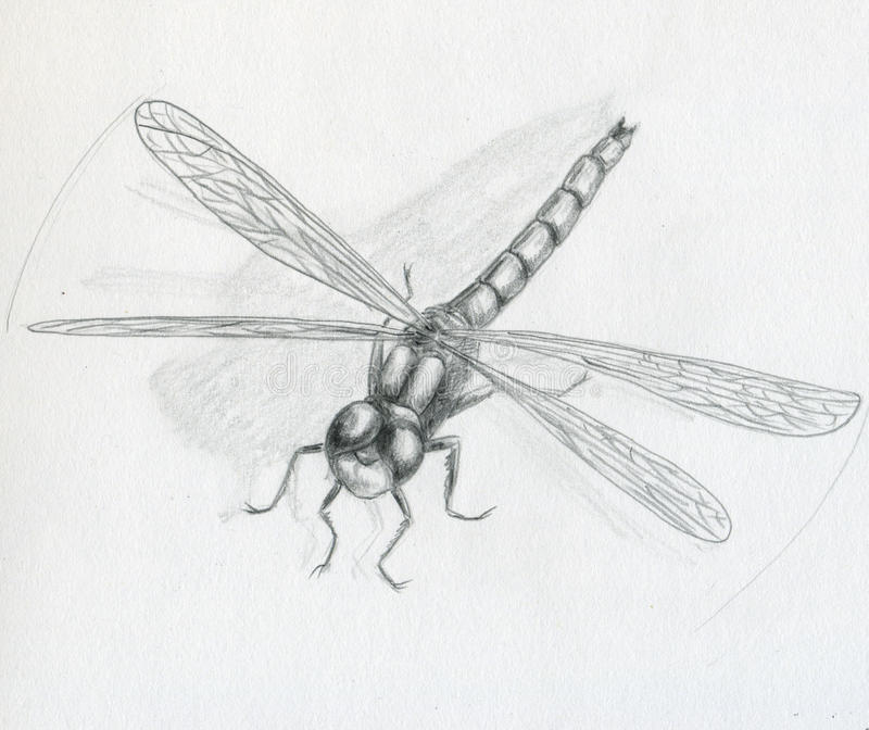 Download Dragonfly - sketch stock illustration. Image of wings - 10016894