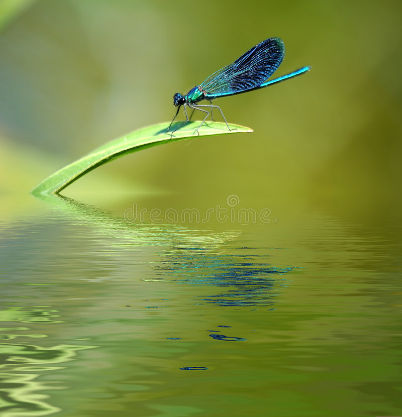Download Dragonfly On Stalk Of Grass. Stock Photo - Image: 5390360