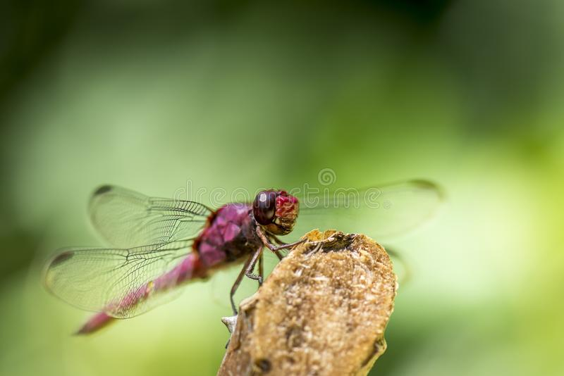 Dragonfly On Stick Free Public Domain Cc0 Image