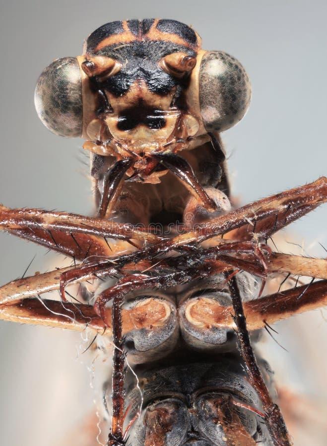 Dragonfly Ultra Macro royalty free stock photo