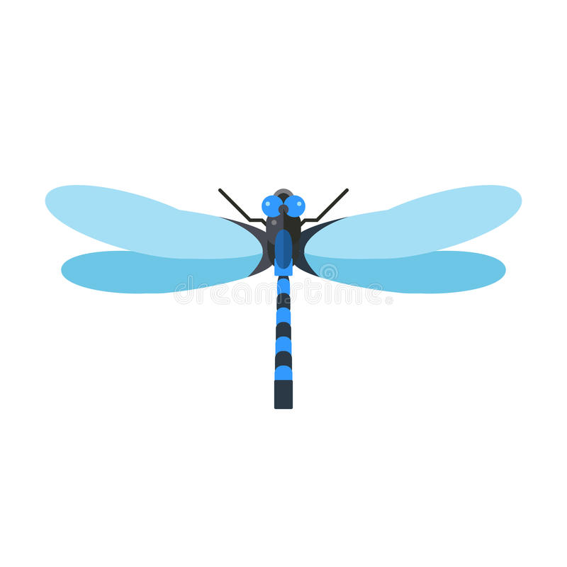 dragonfly vector illustration stock vector illustration of anax rh dreamstime com dragonfly vector image dragonfly vector drawing