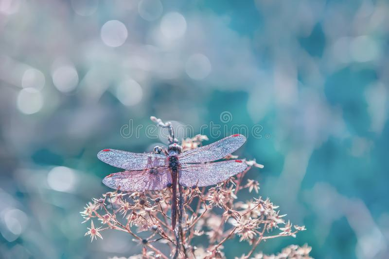 Dragonfly w kropelkach iskrzasta rosa na kwiacie zdjęcie royalty free