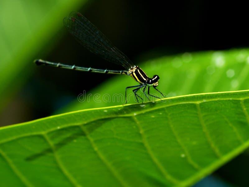 Dragonfly w ogródzie obraz stock