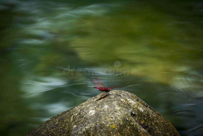 Dragonfly w wiośnie, w Cao uderzeniu, Wietnam fotografia royalty free