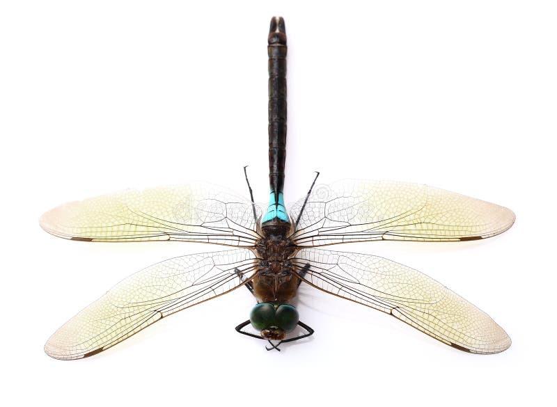 Dragonfly w zbliżeniu zdjęcia stock